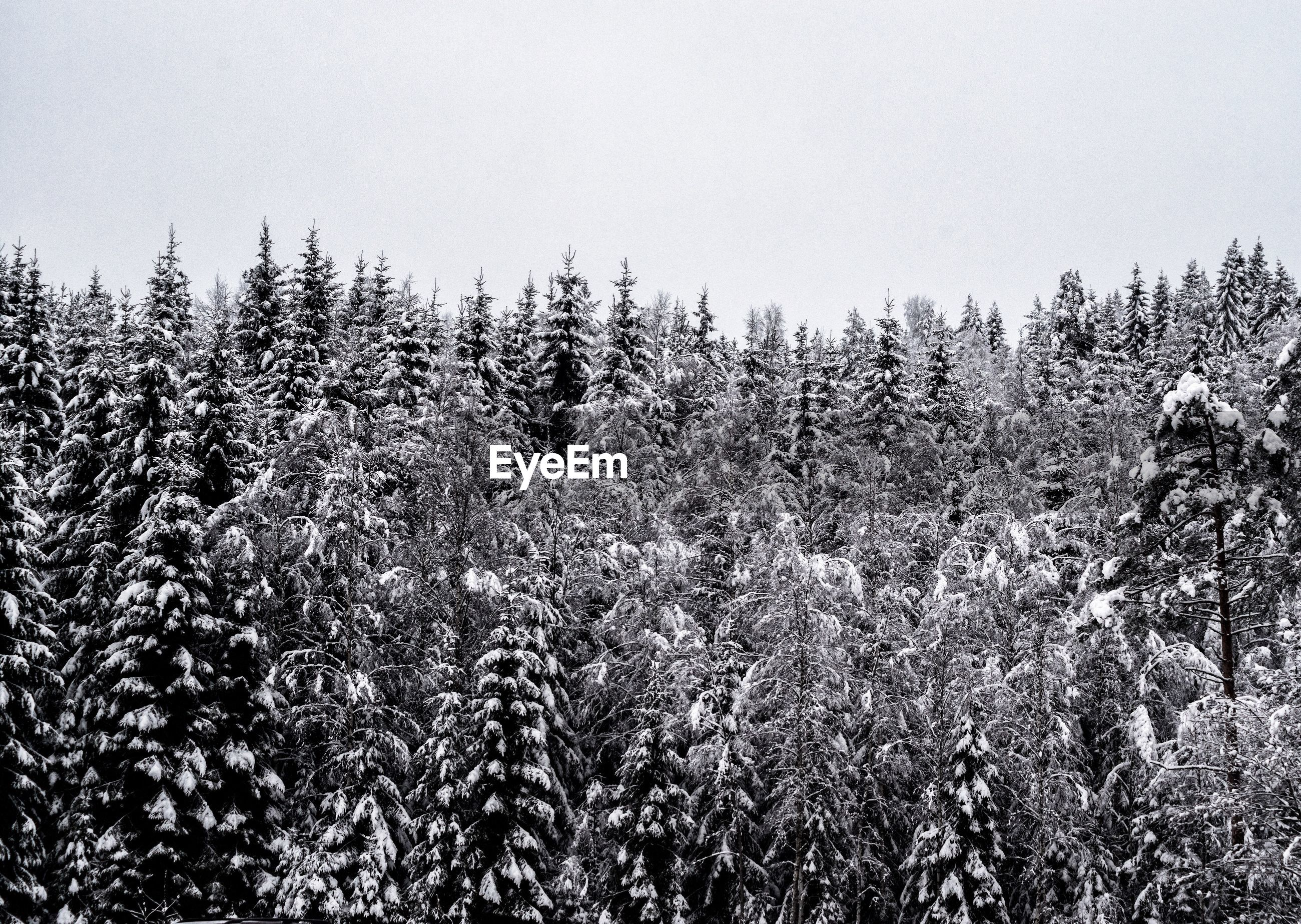 PLANTS GROWING ON SNOW COVERED LANDSCAPE