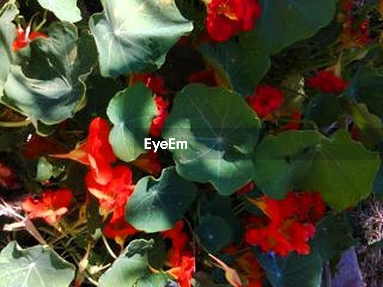 red, no people, multi colored, close-up, fragility, outdoors, day, nature