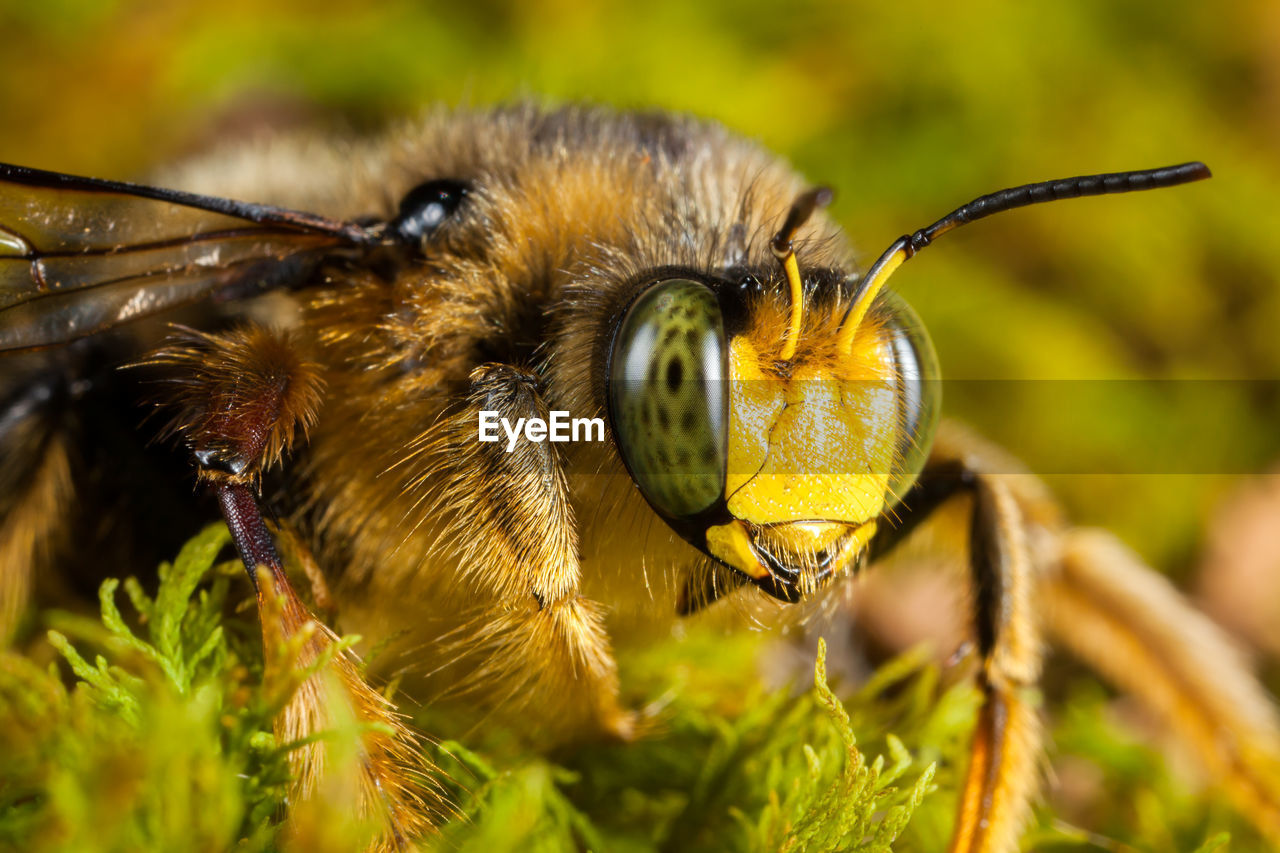 insect, invertebrate, animal wildlife, animals in the wild, animal themes, one animal, animal, close-up, plant, bee, nature, beauty in nature, animal body part, day, focus on foreground, selective focus, no people, animal antenna, eye, outdoors, animal eye, animal wing, pollination, bumblebee, animal head