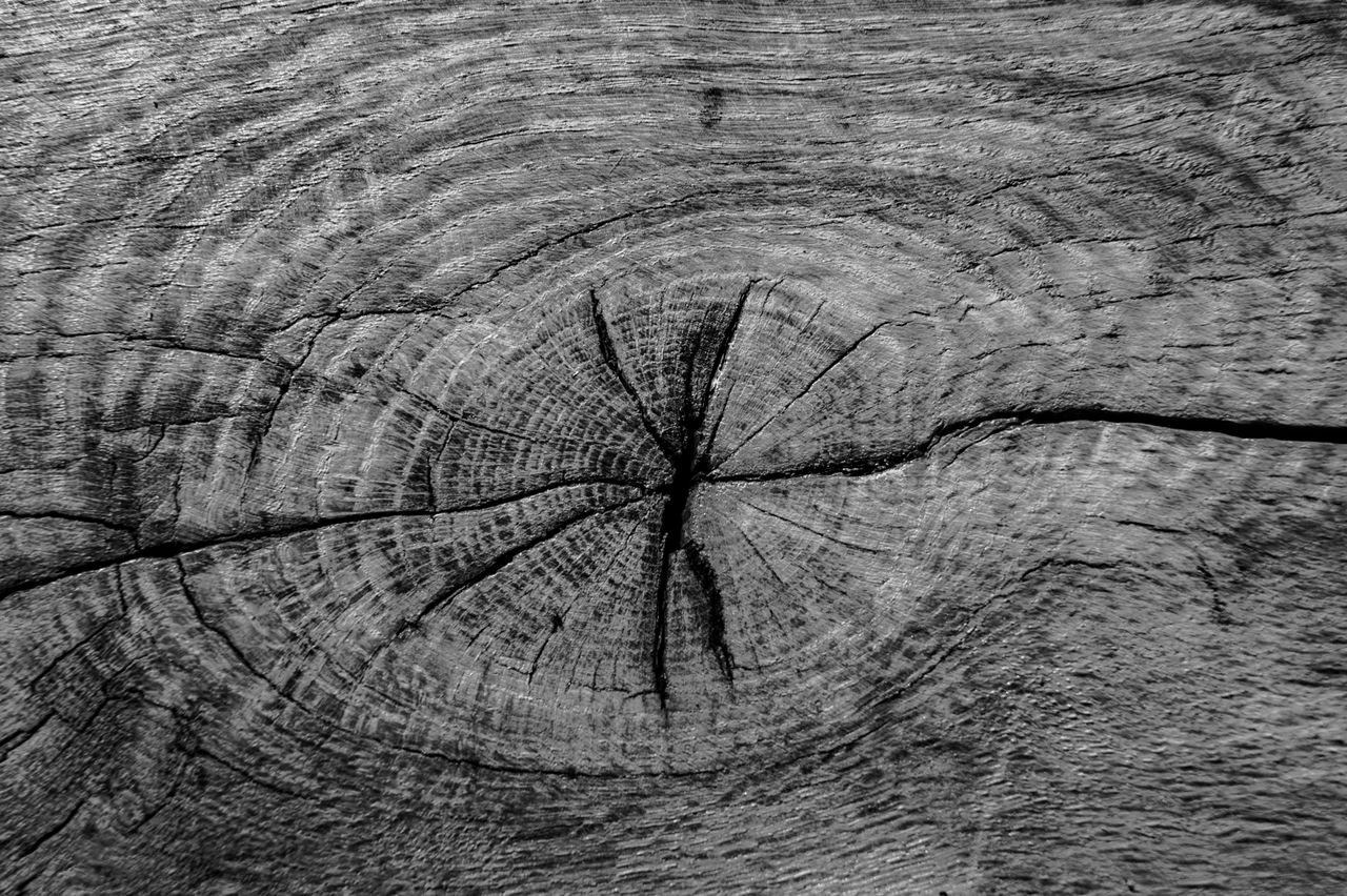 textured, backgrounds, full frame, tree, pattern, wood - material, bark, tree stump, close-up, cracked, tree ring, natural pattern, tree trunk, no people, rough, day, trunk, plant, nature, wood, outdoors, wood grain, concentric, textured effect
