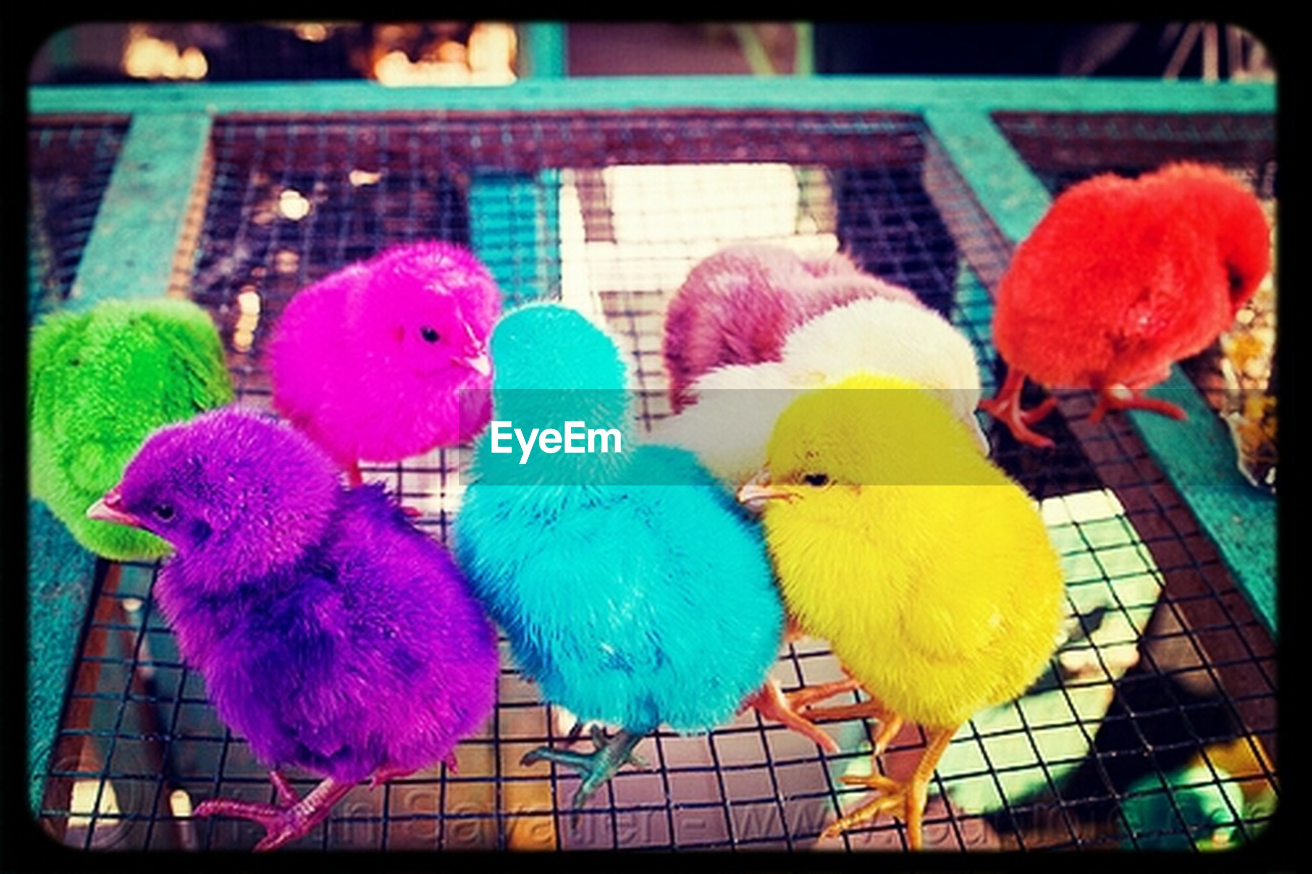 transfer print, multi colored, auto post production filter, bird, animal themes, indoors, variation, animal representation, close-up, parrot, toy, stuffed toy, colorful, no people, birdcage, day, focus on foreground, animals in captivity, childhood, domestic animals