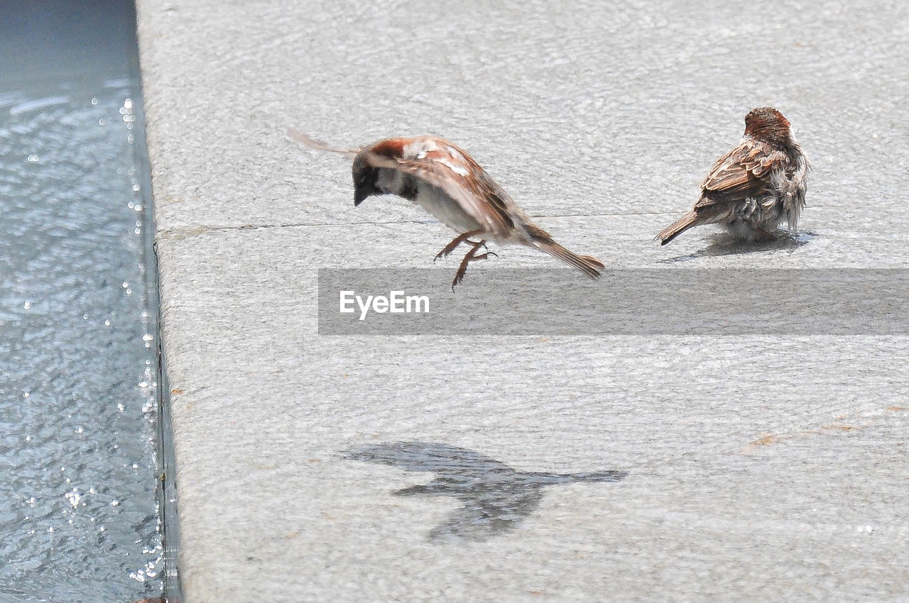 Sparrows on street during sunny day