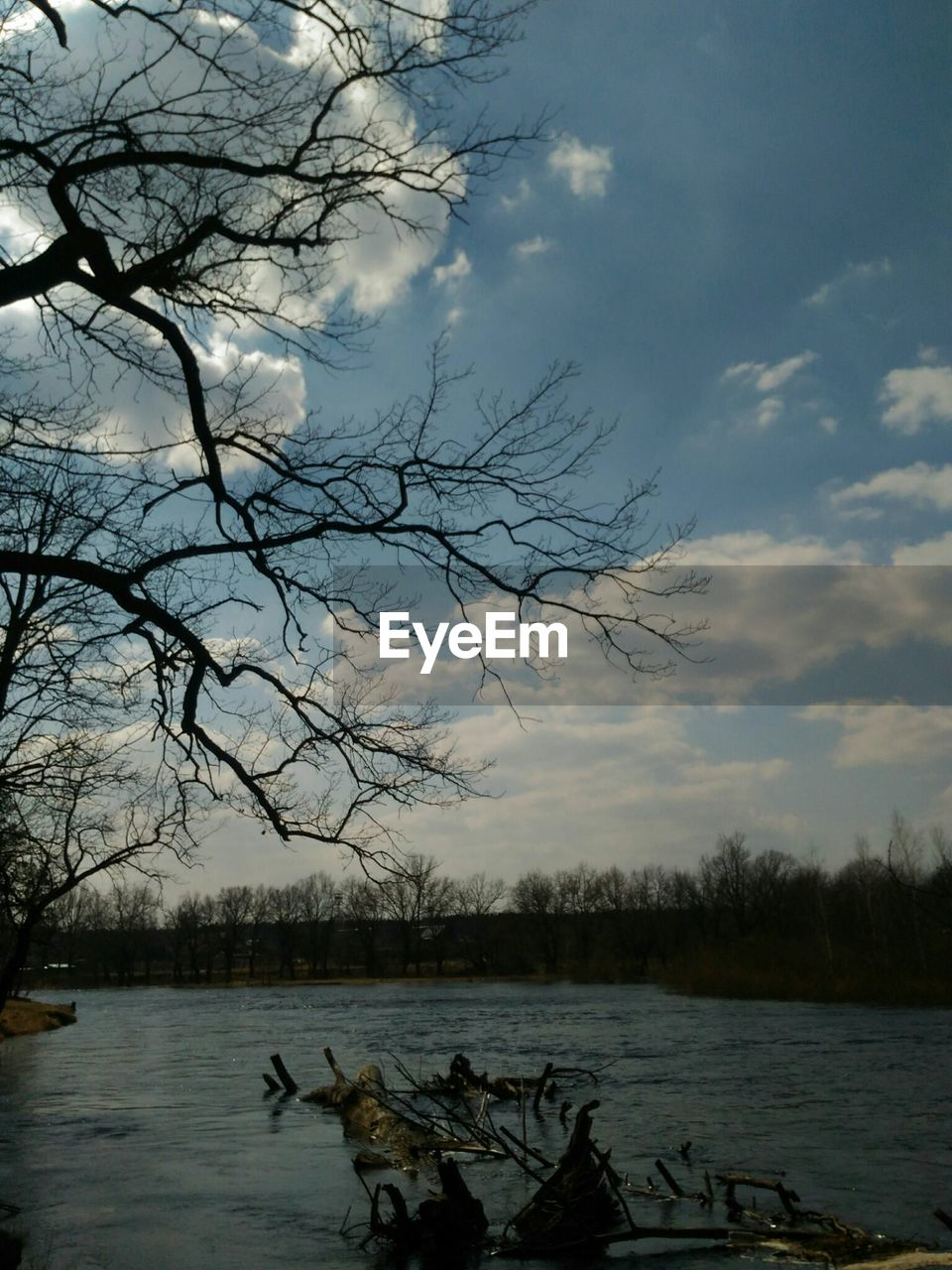 water, tree, sky, lake, beauty in nature, cloud - sky, bare tree, scenics - nature, tranquility, plant, tranquil scene, nature, branch, non-urban scene, animal, no people, animal themes, vertebrate, outdoors