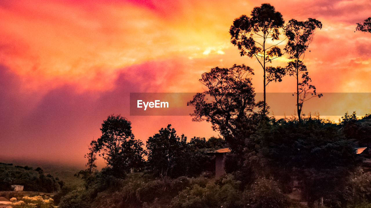 sunset, sky, tree, orange color, plant, cloud - sky, beauty in nature, nature, tranquility, scenics - nature, tranquil scene, no people, growth, silhouette, dramatic sky, outdoors, idyllic, non-urban scene, low angle view, environment, romantic sky