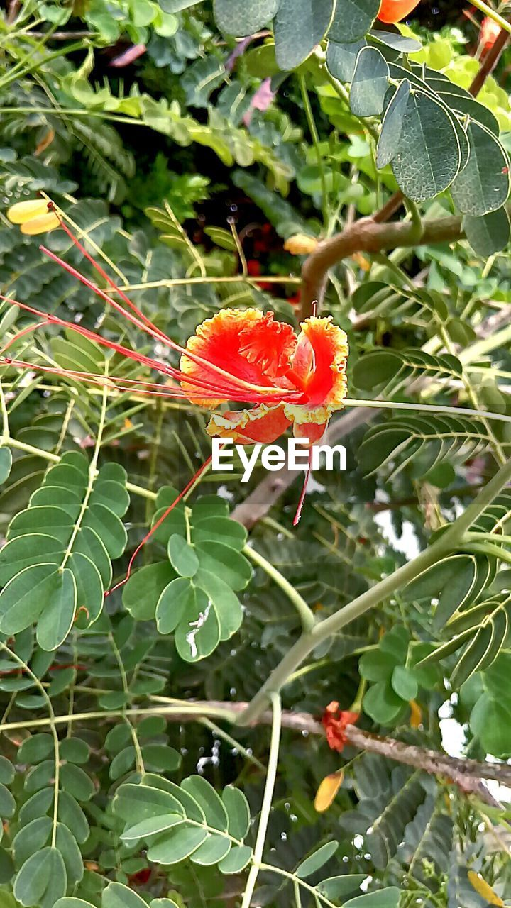 growth, leaf, nature, plant, beauty in nature, outdoors, day, green color, no people, freshness, petal, fragility, flower, animals in the wild, close-up, blooming, animal themes, flower head