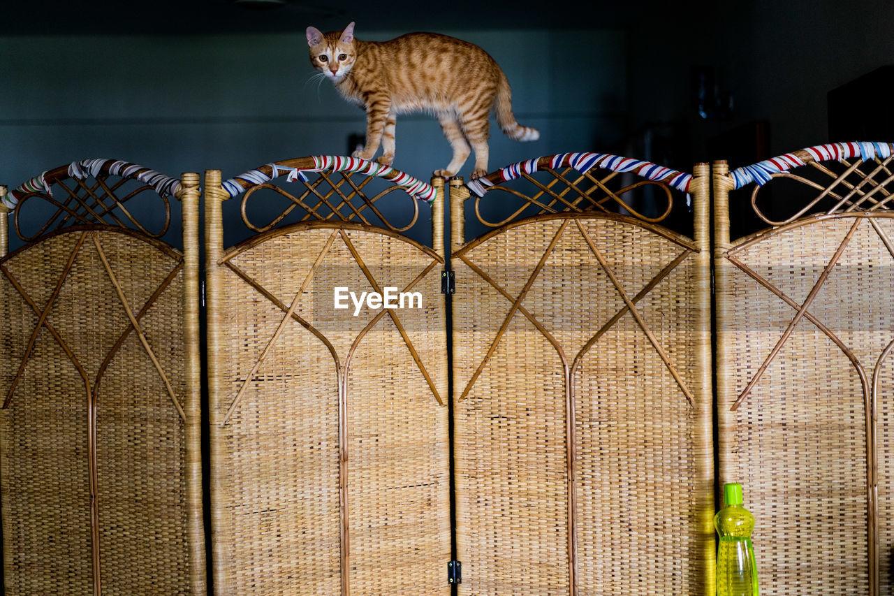 Portrait Of Cat On Room Divider