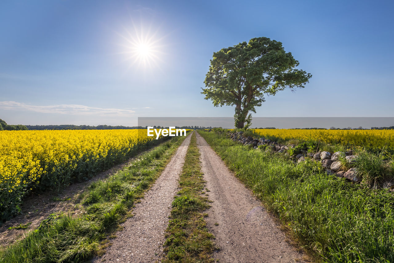 sky, plant, landscape, field, land, direction, environment, road, tranquil scene, nature, the way forward, beauty in nature, diminishing perspective, scenics - nature, grass, tranquility, rural scene, growth, sunlight, no people, sun, outdoors, lens flare