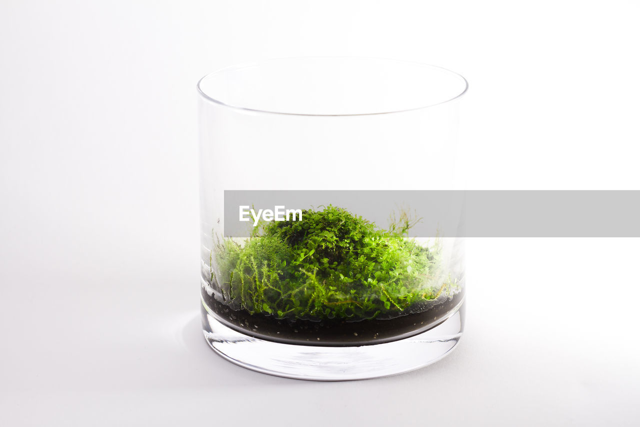 Close up of plant in glass against white background