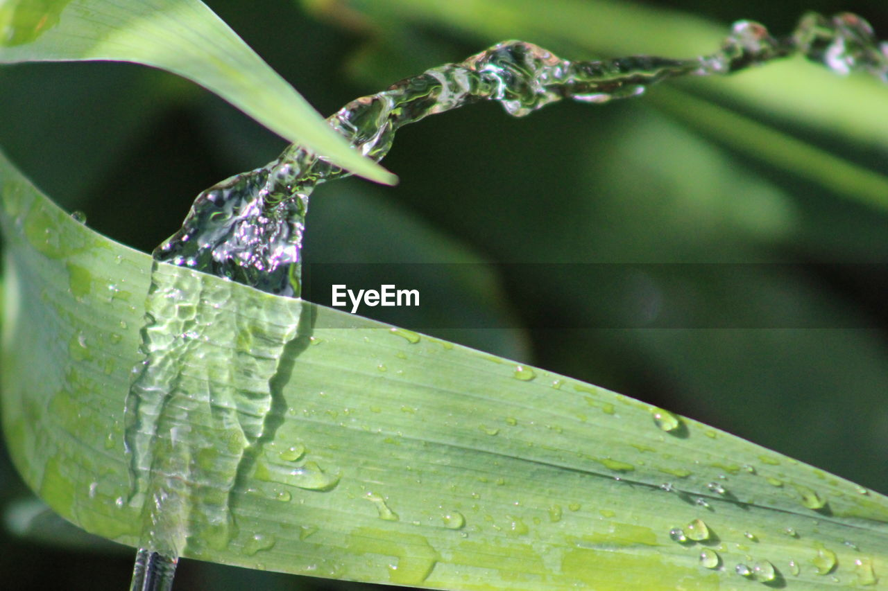 drop, nature, leaf, growth, green color, water, plant, beauty in nature, close-up, day, no people, outdoors, wet, freshness, focus on foreground, fragility, raindrop, purity