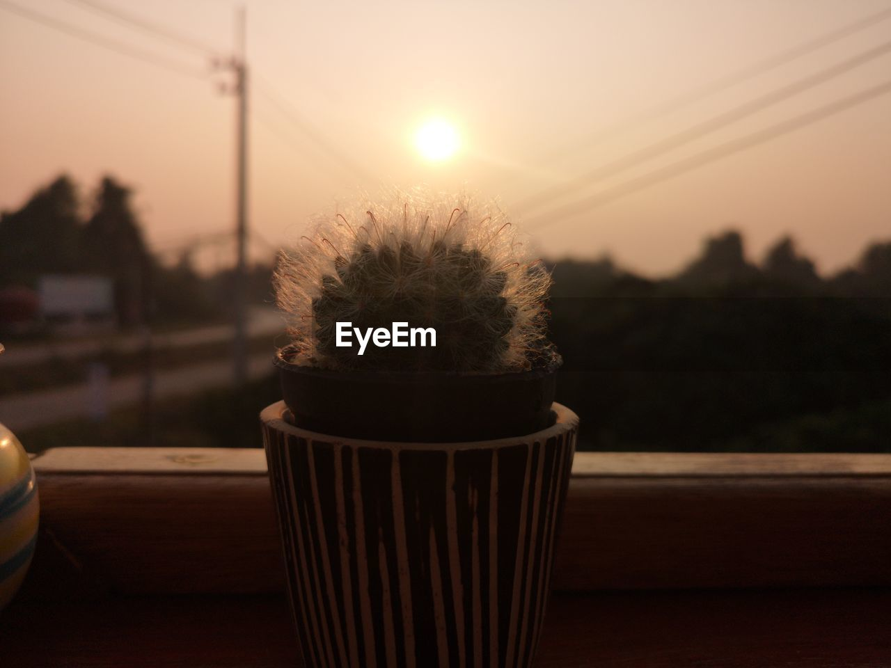 CLOSE-UP OF POTTED PLANT ON TABLE AT SUNSET