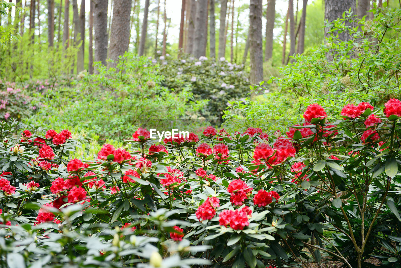 Red Flowers Growing In Forest