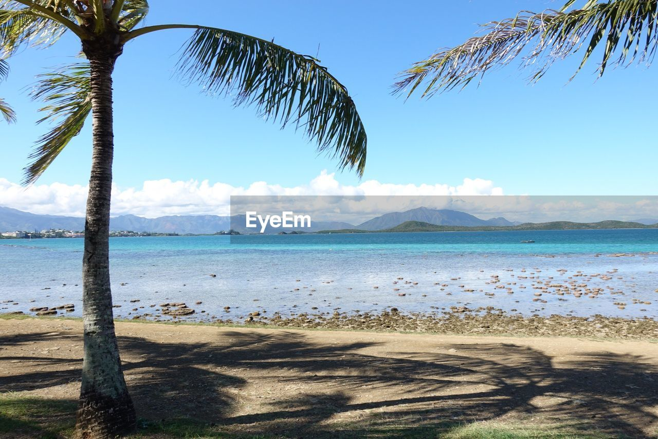 sky, water, beach, tropical climate, palm tree, land, tree, sea, beauty in nature, tranquil scene, scenics - nature, plant, tranquility, nature, sand, day, cloud - sky, no people, sunlight, horizon over water, outdoors, coconut palm tree, tropical tree