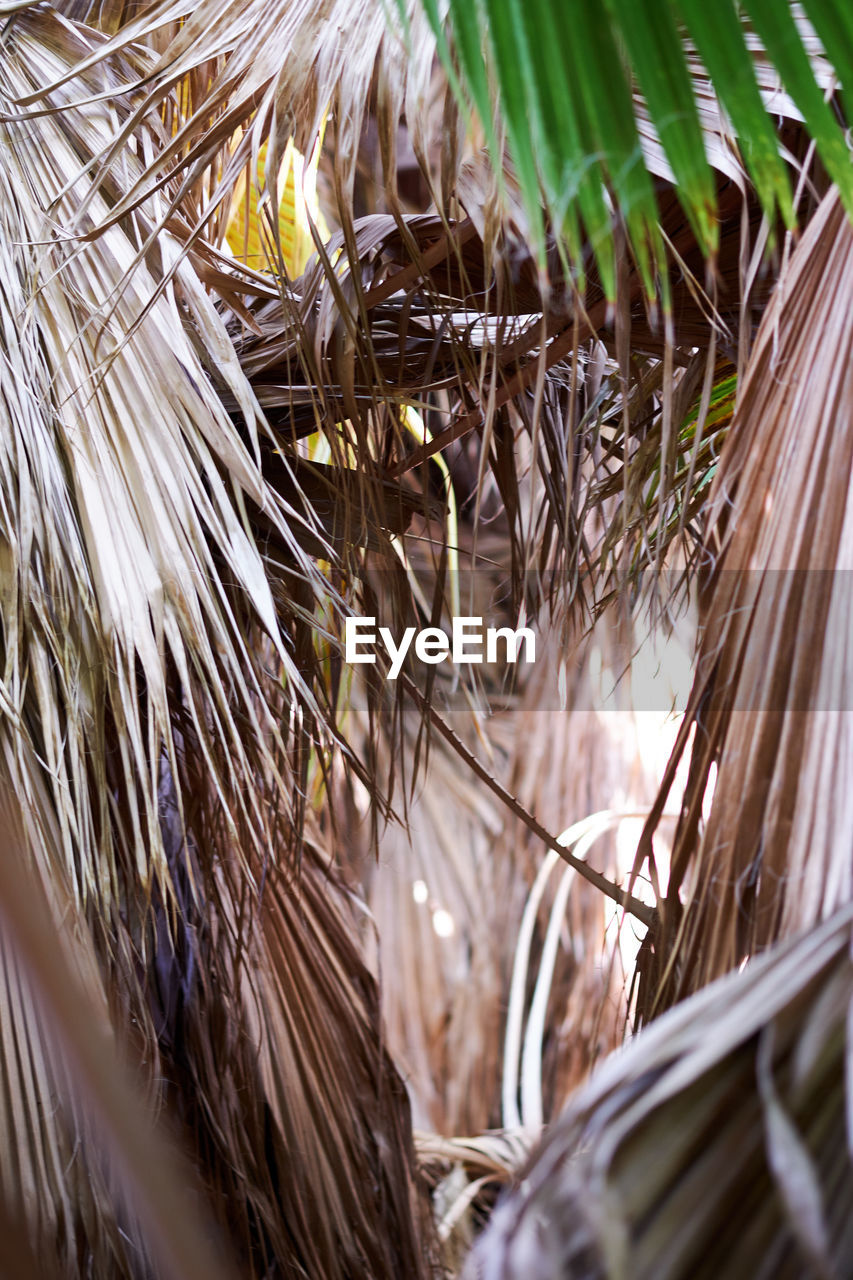 plant, selective focus, close-up, nature, day, no people, growth, plant part, leaf, dry, outdoors, vulnerability, fragility, grass, tree, sunlight, field, palm tree, high angle view, land, palm leaf