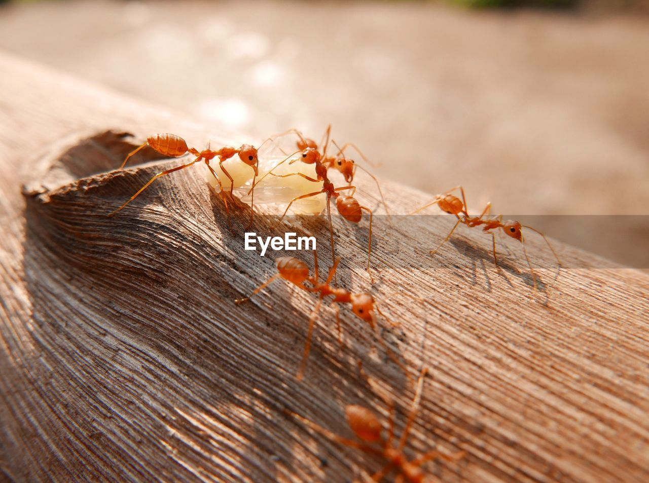 Close-Up Of Ants On Log