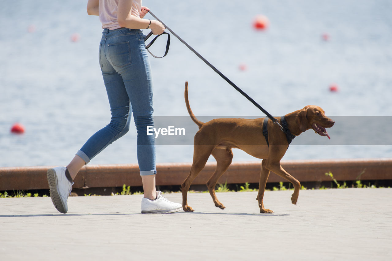 Low section of woman with dog walking on beach