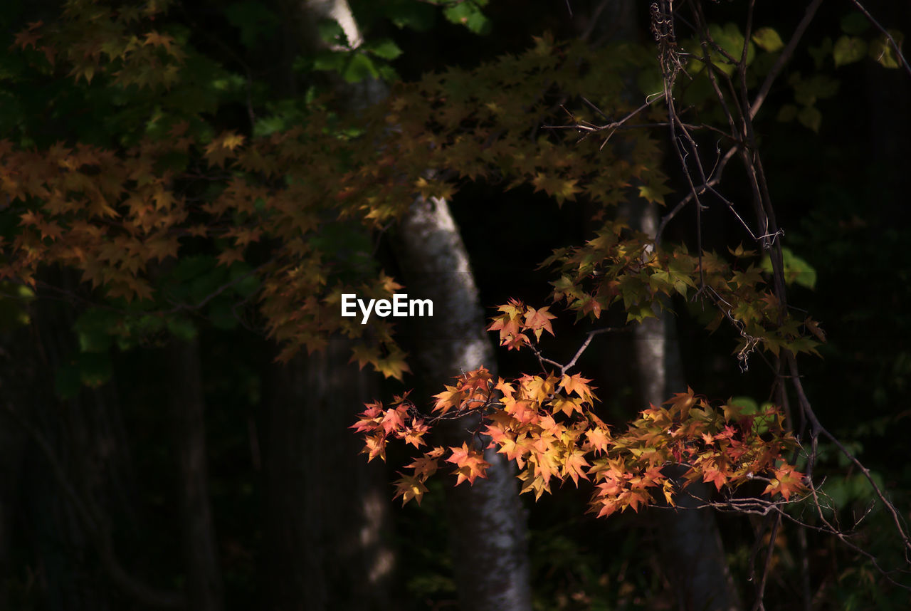 nature, growth, autumn, no people, tree, beauty in nature, outdoors, tranquility, plant, flower, night, close-up