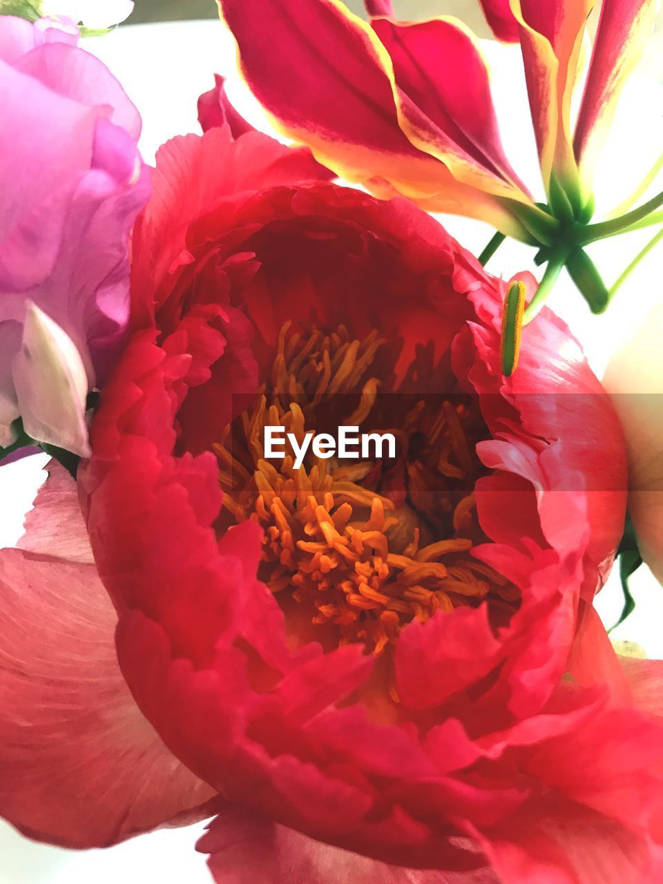 flowering plant, flower, plant, freshness, petal, flower head, vulnerability, fragility, beauty in nature, inflorescence, close-up, red, nature, growth, pink color, focus on foreground, day, no people, outdoors, pollen, flower arrangement, bouquet