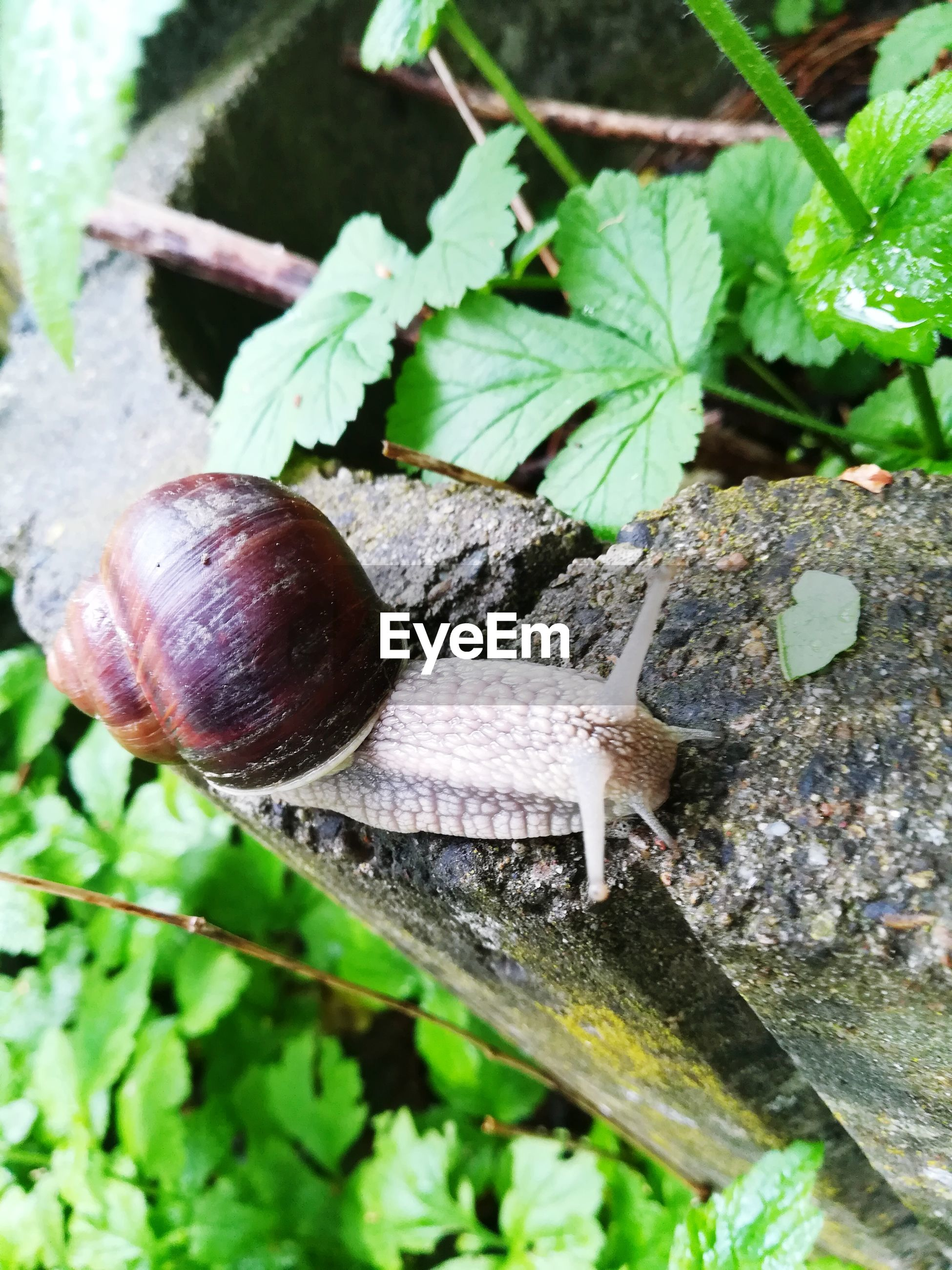CLOSE-UP OF SNAIL ON A LEAF