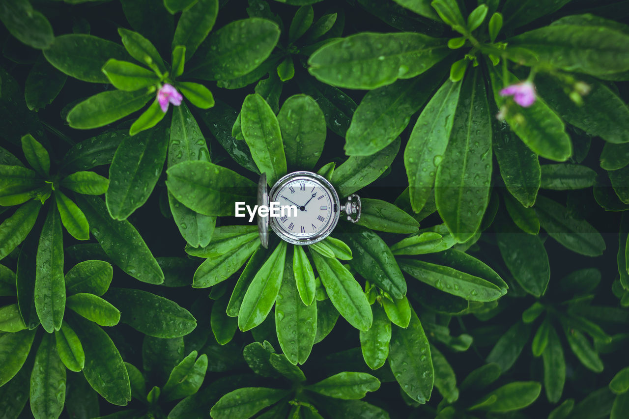 High Angle View Of Clock On Plant