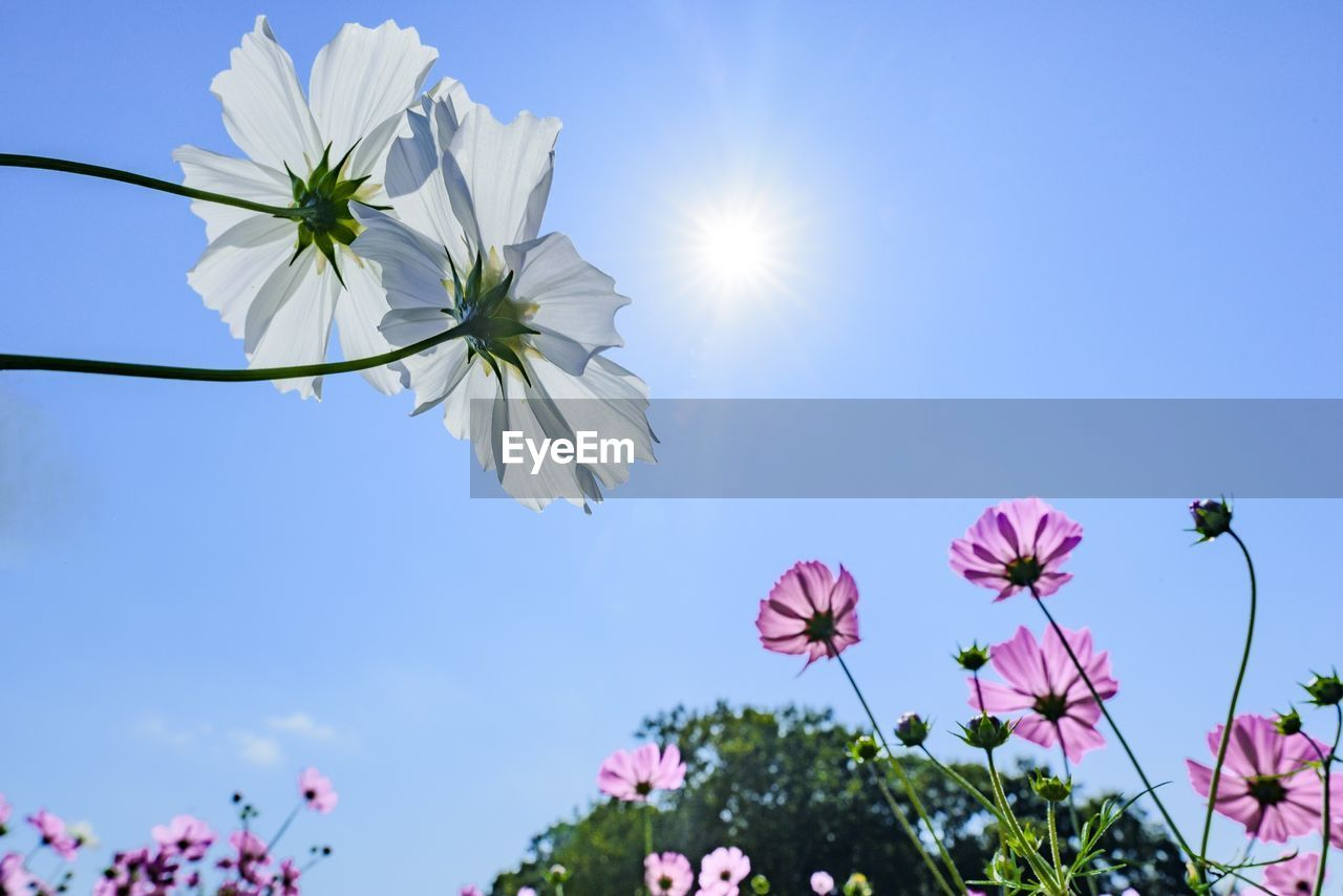 Low angle view of flowers growing against sky