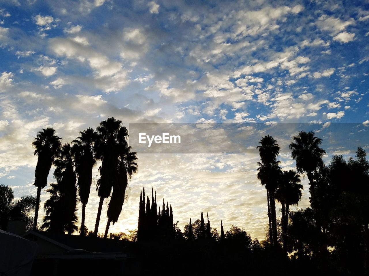 tree, sky, silhouette, beauty in nature, cloud - sky, no people, palm tree, growth, nature, low angle view, sunset, outdoors, tranquility, tranquil scene, scenics, day