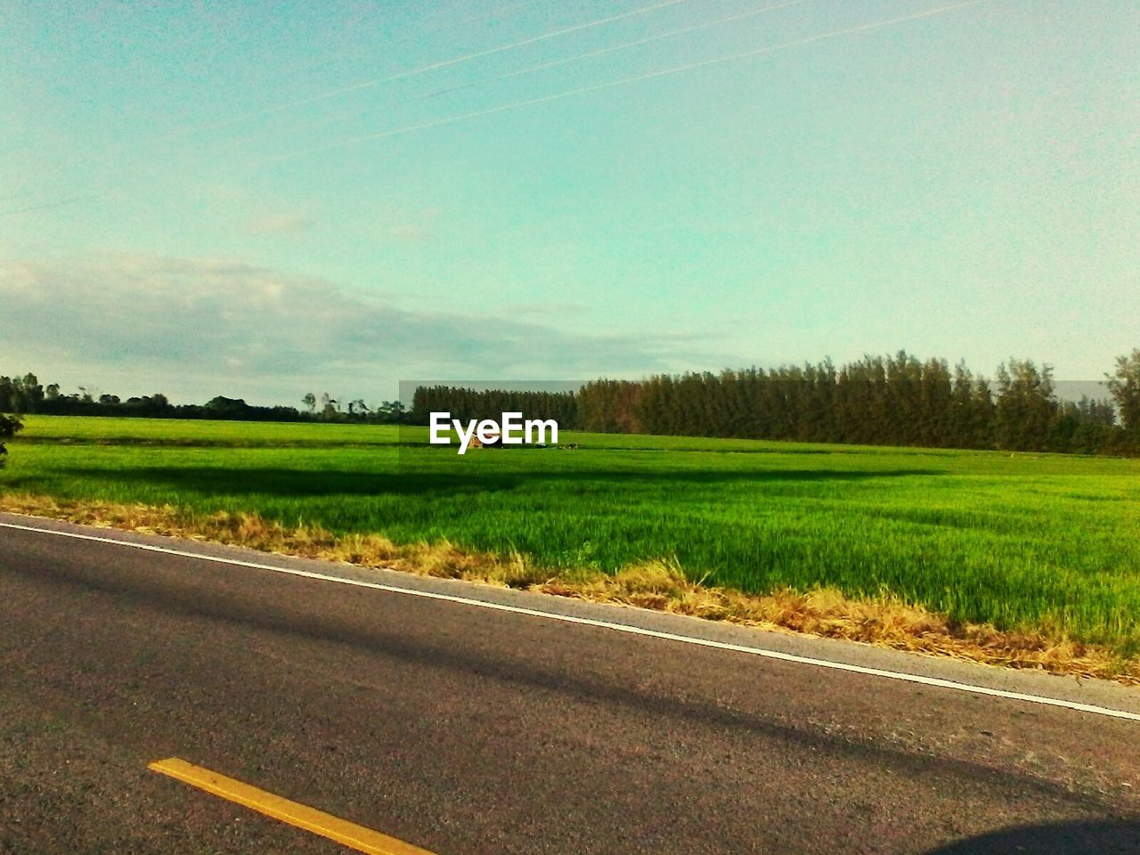 field, grass, road, nature, landscape, green color, no people, day, agriculture, transportation, scenics, tranquil scene, tree, growth, outdoors, rural scene, beauty in nature, tranquility, sky, plant