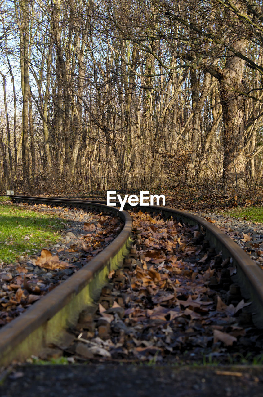 Close-Up Of Railroad Track Amidst Trees