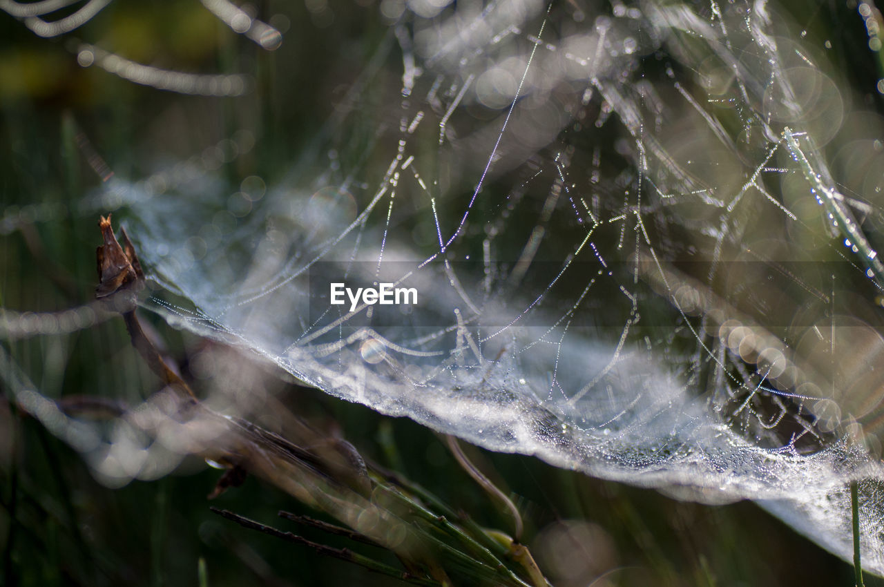 spider web, close-up, fragility, vulnerability, plant, nature, no people, day, focus on foreground, water, beauty in nature, selective focus, spider, drop, wet, web, outdoors, complexity, growth, dew, softness