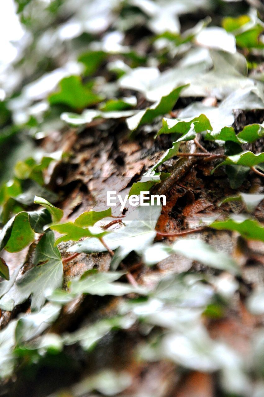 selective focus, leaf, growth, plant, no people, nature, close-up, day, outdoors