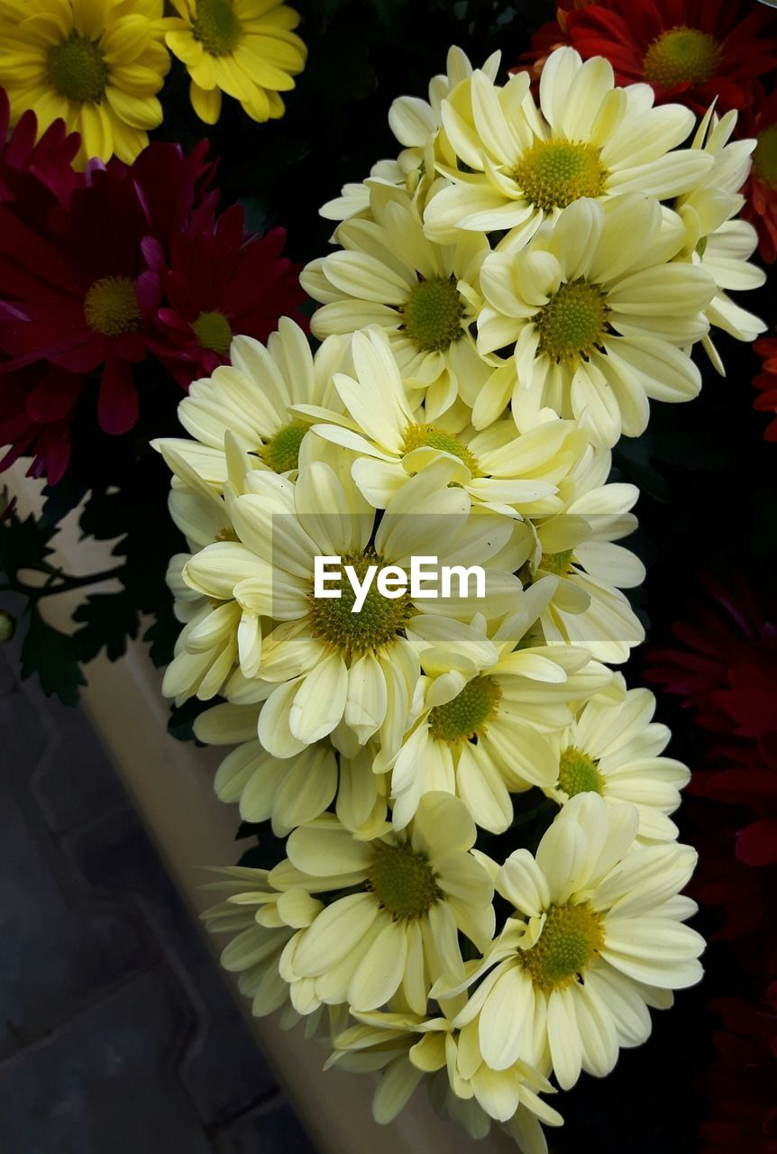 flower, petal, yellow, beauty in nature, freshness, fragility, nature, flower head, growth, no people, choice, blooming, close-up, outdoors, day