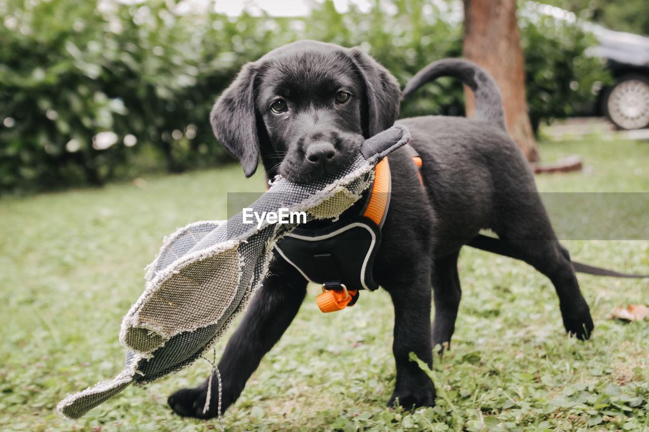 Portrait of cute puppy standing on field