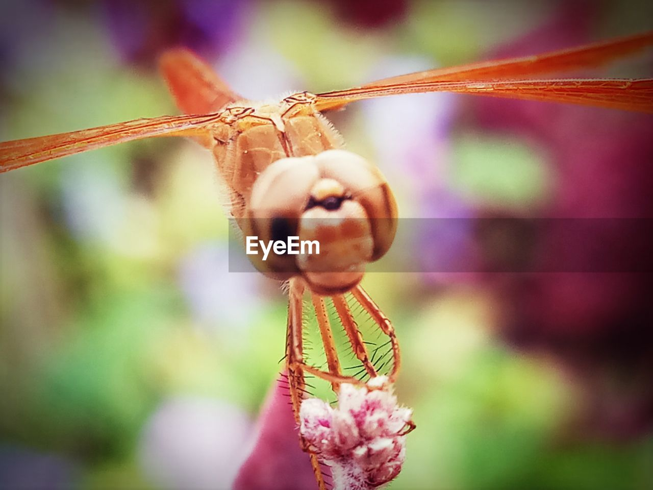 focus on foreground, outdoors, close-up, day, nature, plant, no people, growth, beauty in nature, animal themes, freshness