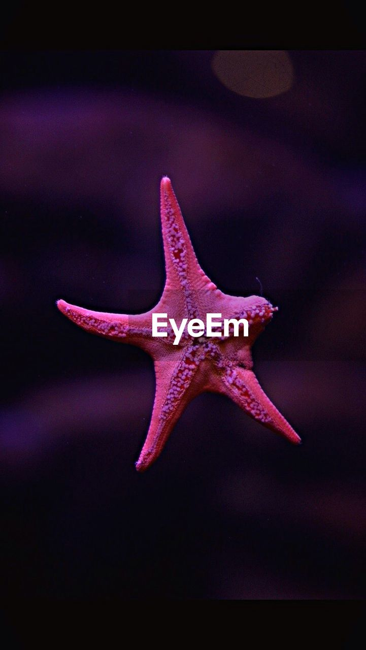 star shape, starfish, one animal, animal themes, sea life, wildlife, animals in the wild, close-up, nature, no people, water, aquarium, beauty in nature, day, outdoors