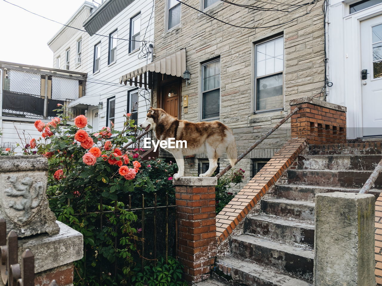 architecture, building exterior, built structure, animal, vertebrate, building, animal themes, mammal, plant, domestic animals, domestic, pets, nature, flowering plant, flower, one animal, cat, day, domestic cat, no people, outdoors