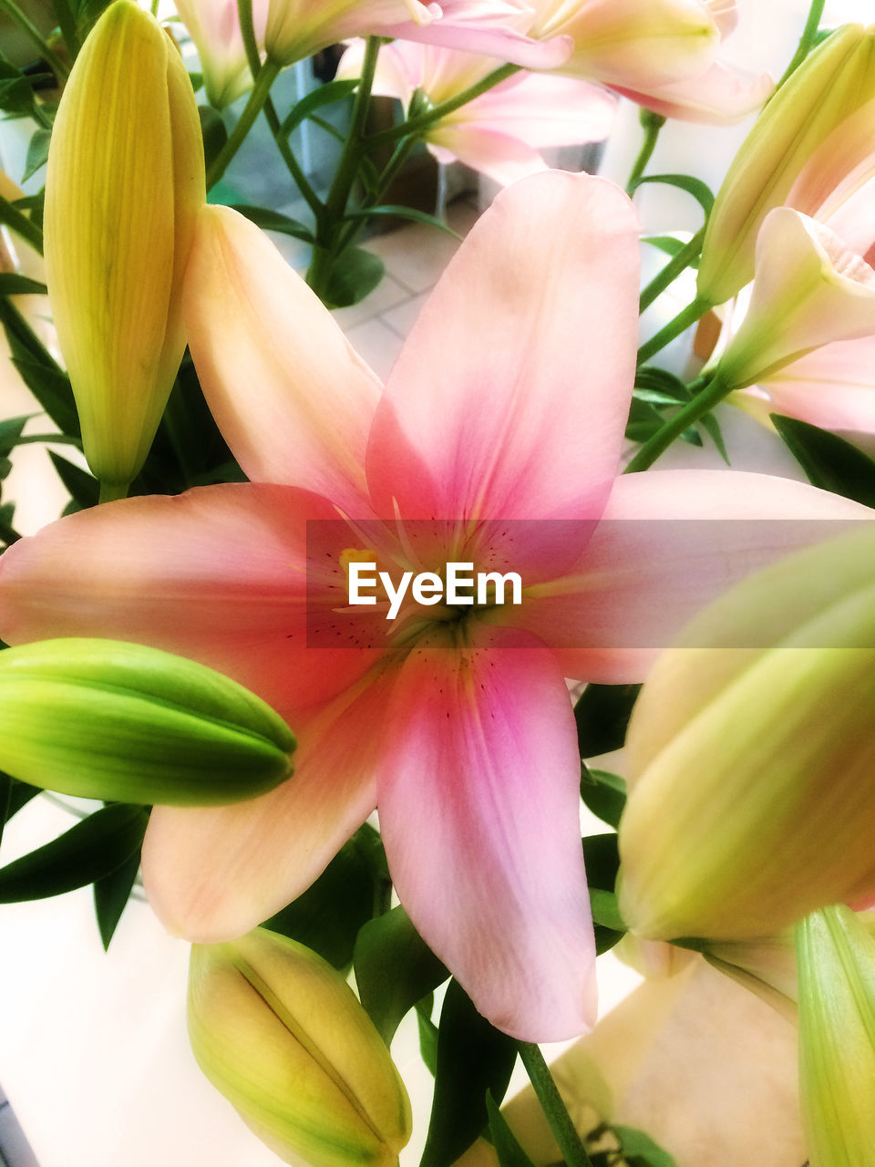 flower, petal, fragility, freshness, beauty in nature, flower head, growth, nature, plant, close-up, no people, blooming, day, outdoors, day lily
