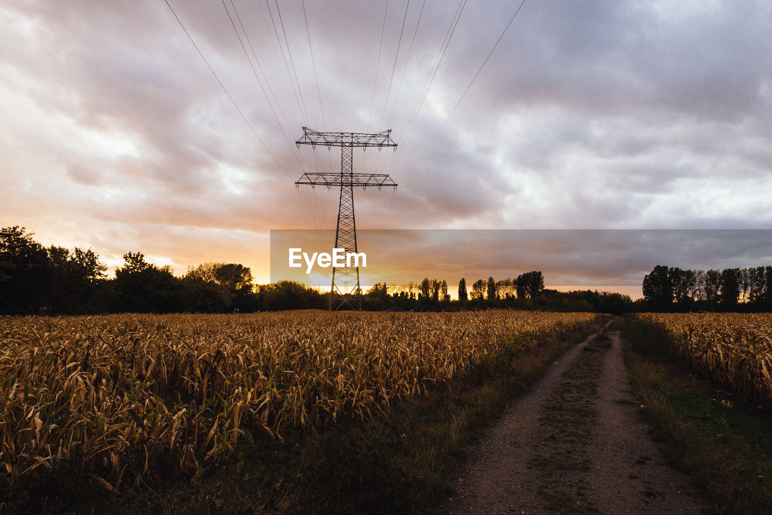 sky, landscape, cloud, electricity, electricity pylon, rural scene, technology, agriculture, environment, field, cable, horizon, land, power generation, power supply, nature, sunset, crop, power line, plant, cereal plant, no people, transportation, scenics - nature, road, evening, dramatic sky, dusk, farm, beauty in nature, tree, tranquility, outdoors, rural area, sunlight, overhead power line, growth, diminishing perspective, tranquil scene, cloudscape, corn, vanishing point, non-urban scene, dirt road, the way forward, storm, in a row