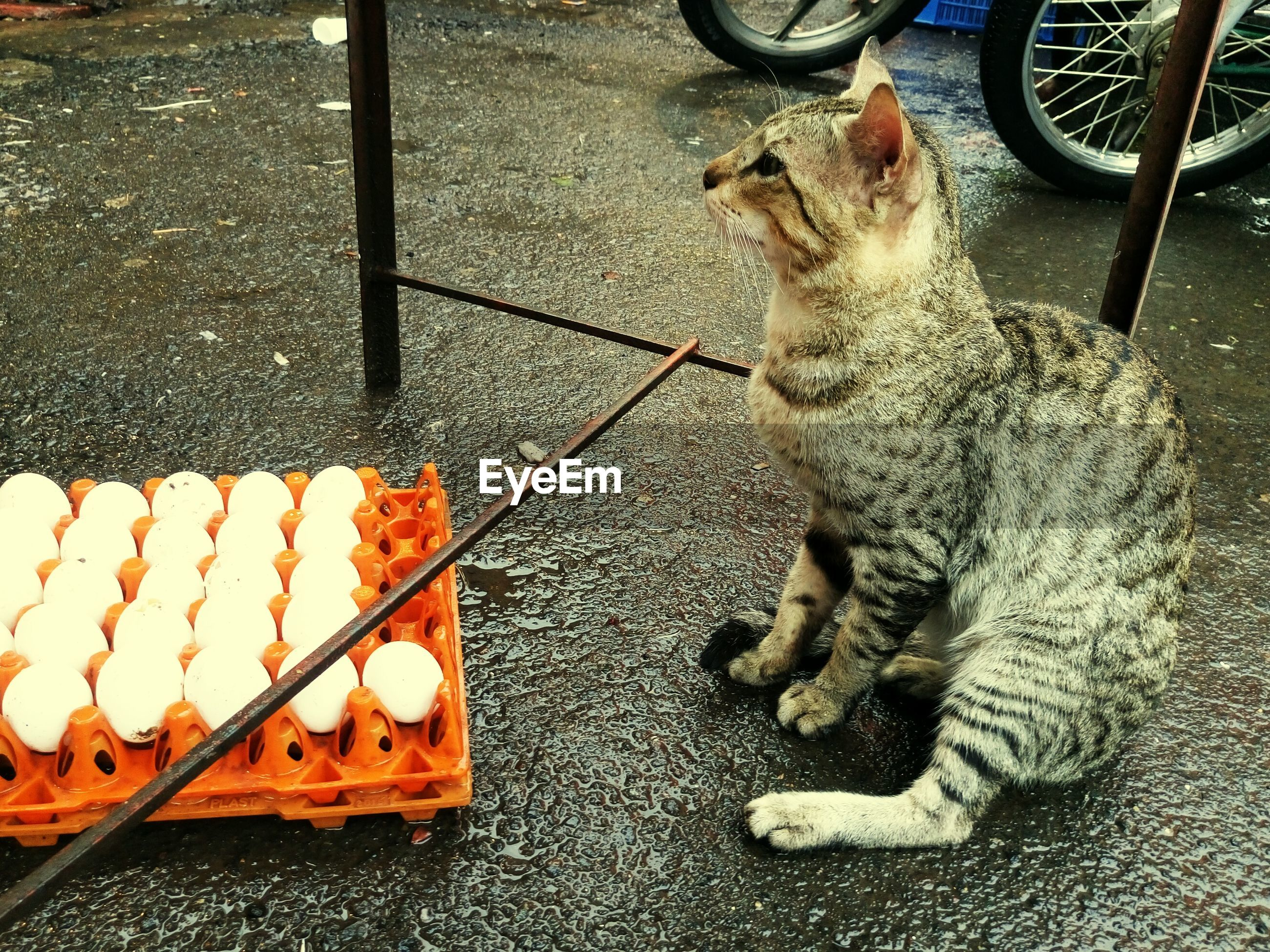 High angle view of cat by egg crate on wet road