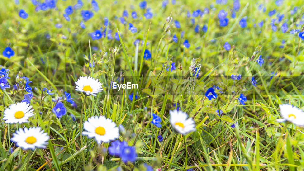 flower, growth, nature, field, plant, beauty in nature, meadow, spring, freshness, grass, flora, uncultivated, blooming, fragility, summer, no people, outdoors, flower head, day
