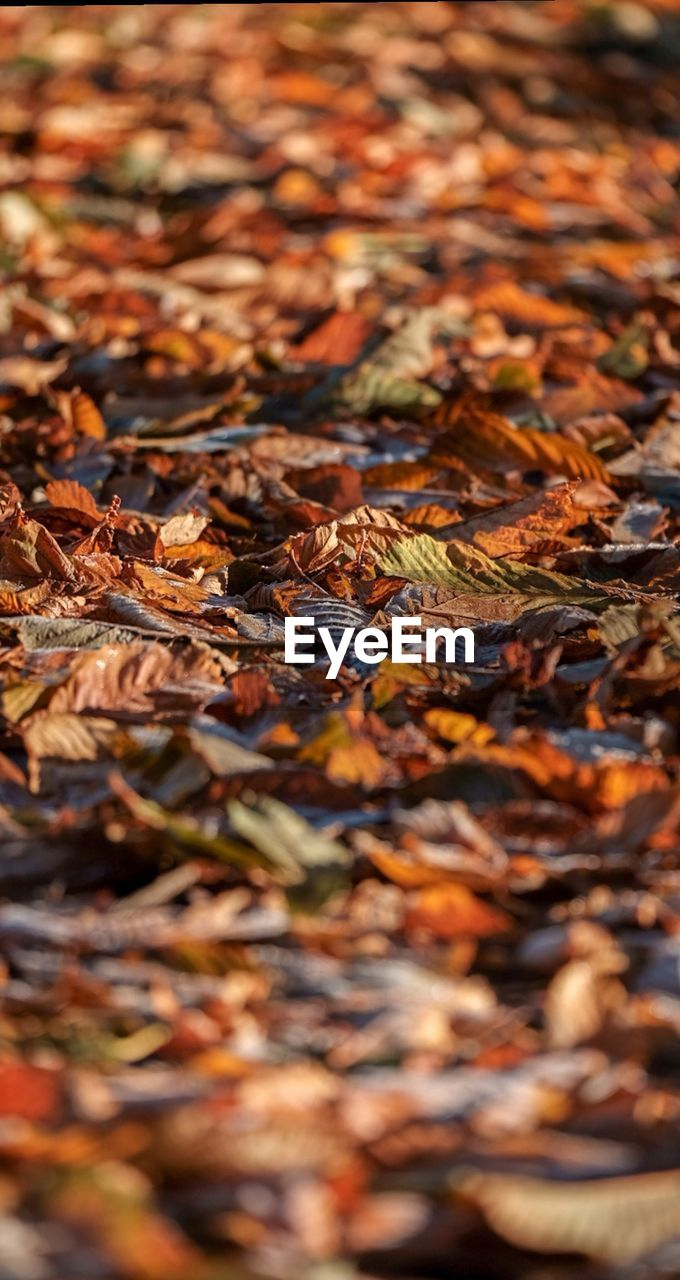 plant part, change, leaf, autumn, dry, backgrounds, selective focus, full frame, leaves, no people, close-up, nature, falling, day, orange color, abundance, vulnerability, beauty in nature, fragility, large group of objects, outdoors, natural condition, maple leaf, autumn collection, fall
