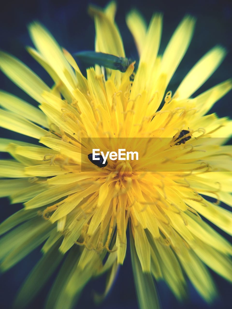 flowering plant, flower, yellow, fragility, plant, beauty in nature, vulnerability, petal, flower head, growth, close-up, freshness, inflorescence, animal wildlife, one animal, animals in the wild, animal themes, invertebrate, insect, nature, no people, pollen, pollination