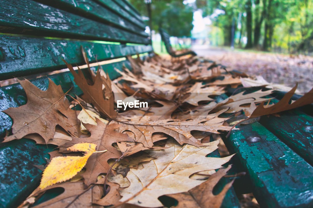 Close-Up Of Dry Leaves Fallen On Tree