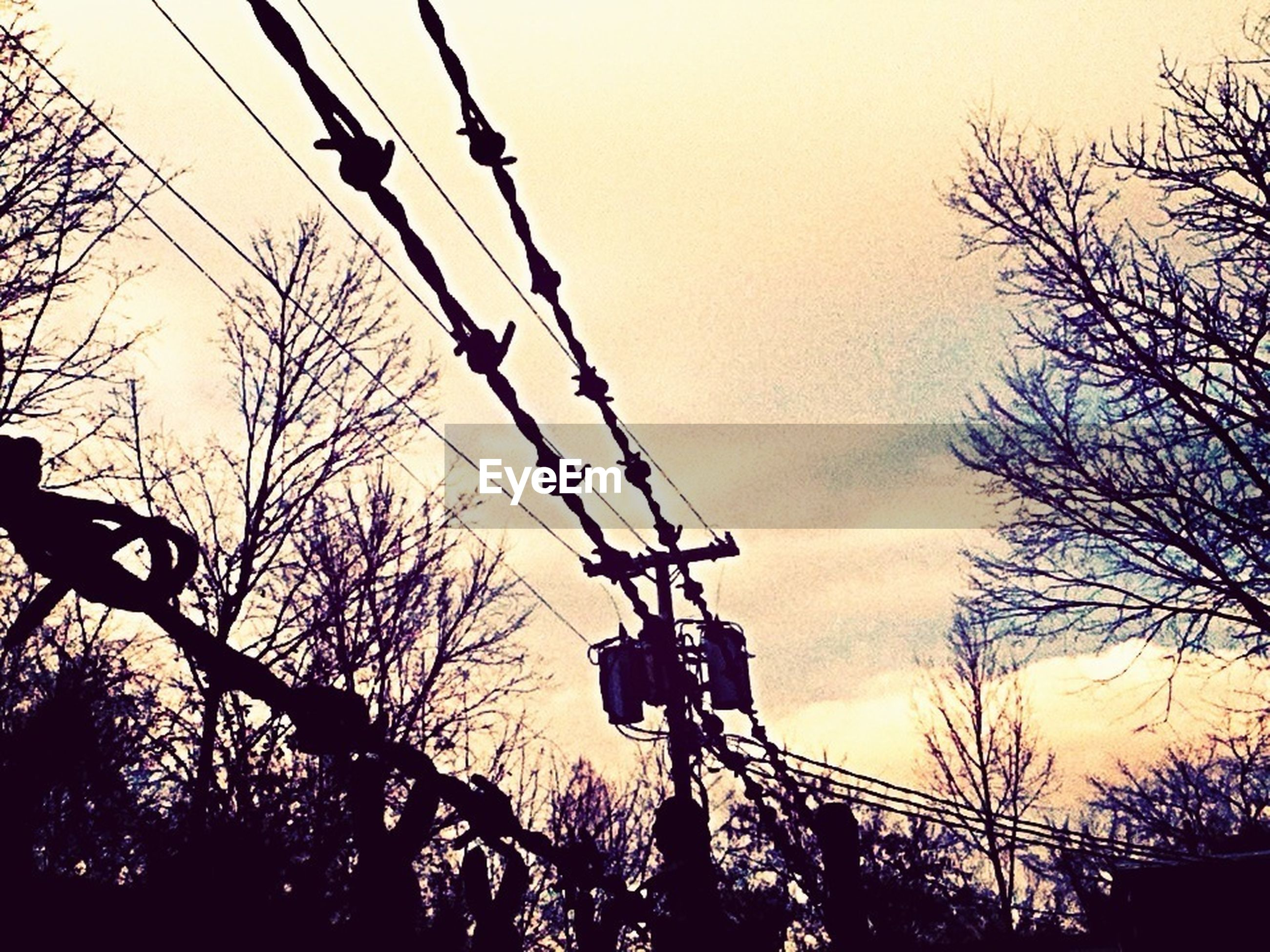 silhouette, low angle view, power line, tree, electricity pylon, electricity, connection, sunset, sky, power supply, technology, cable, bare tree, fuel and power generation, dusk, branch, nature, outdoors, built structure, power cable