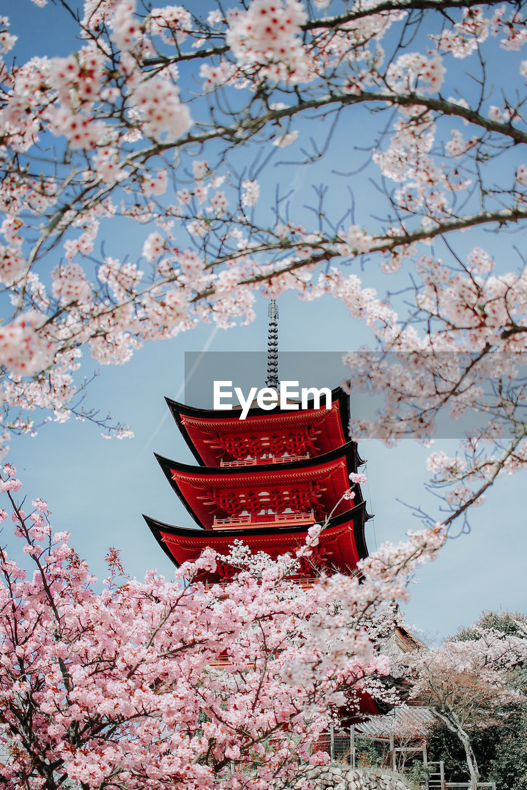 Low angle view of pagoda seen through cherry blossoms against sky