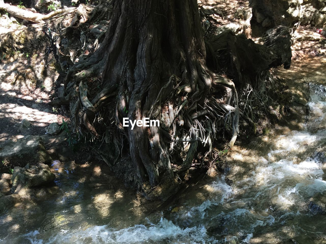 tree trunk, nature, tree, day, no people, textured, water, waterfront, outdoors, tranquility, beauty in nature, sunlight, close-up