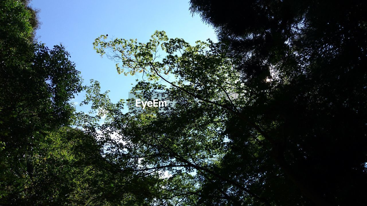 tree, nature, low angle view, forest, beauty in nature, growth, green, tranquility, day, no people, scenics, outdoors, branch, sky, blue sky