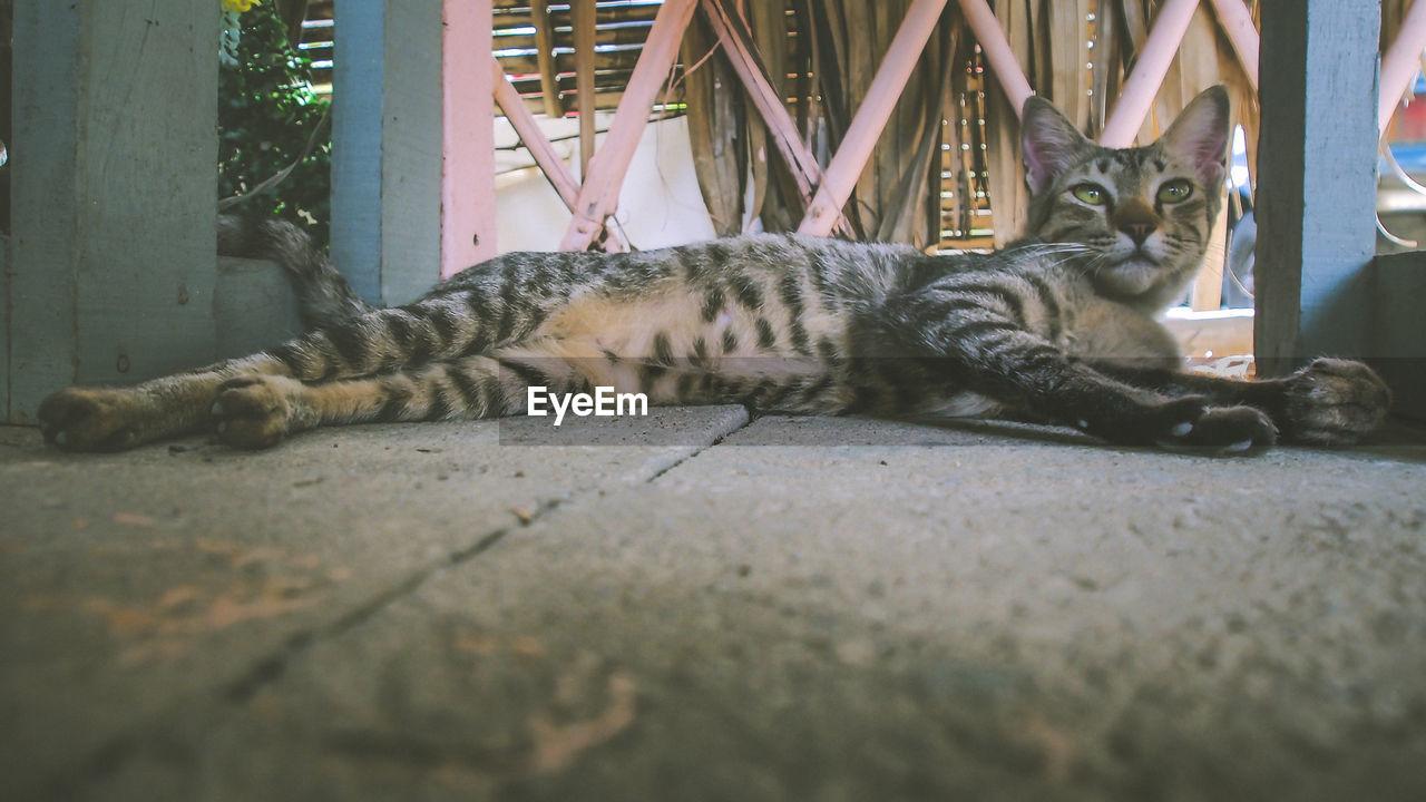 Alert Cat Relaxing On Floor