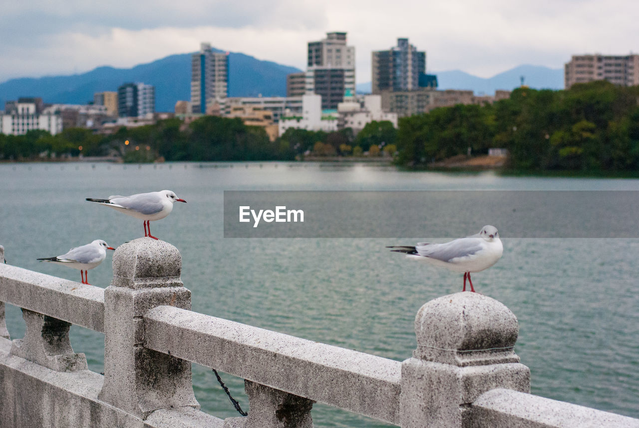 bird, animals in the wild, vertebrate, animal wildlife, animal, animal themes, water, architecture, perching, seagull, built structure, building exterior, focus on foreground, railing, group of animals, sea, nature, day, city, no people, outdoors, cityscape