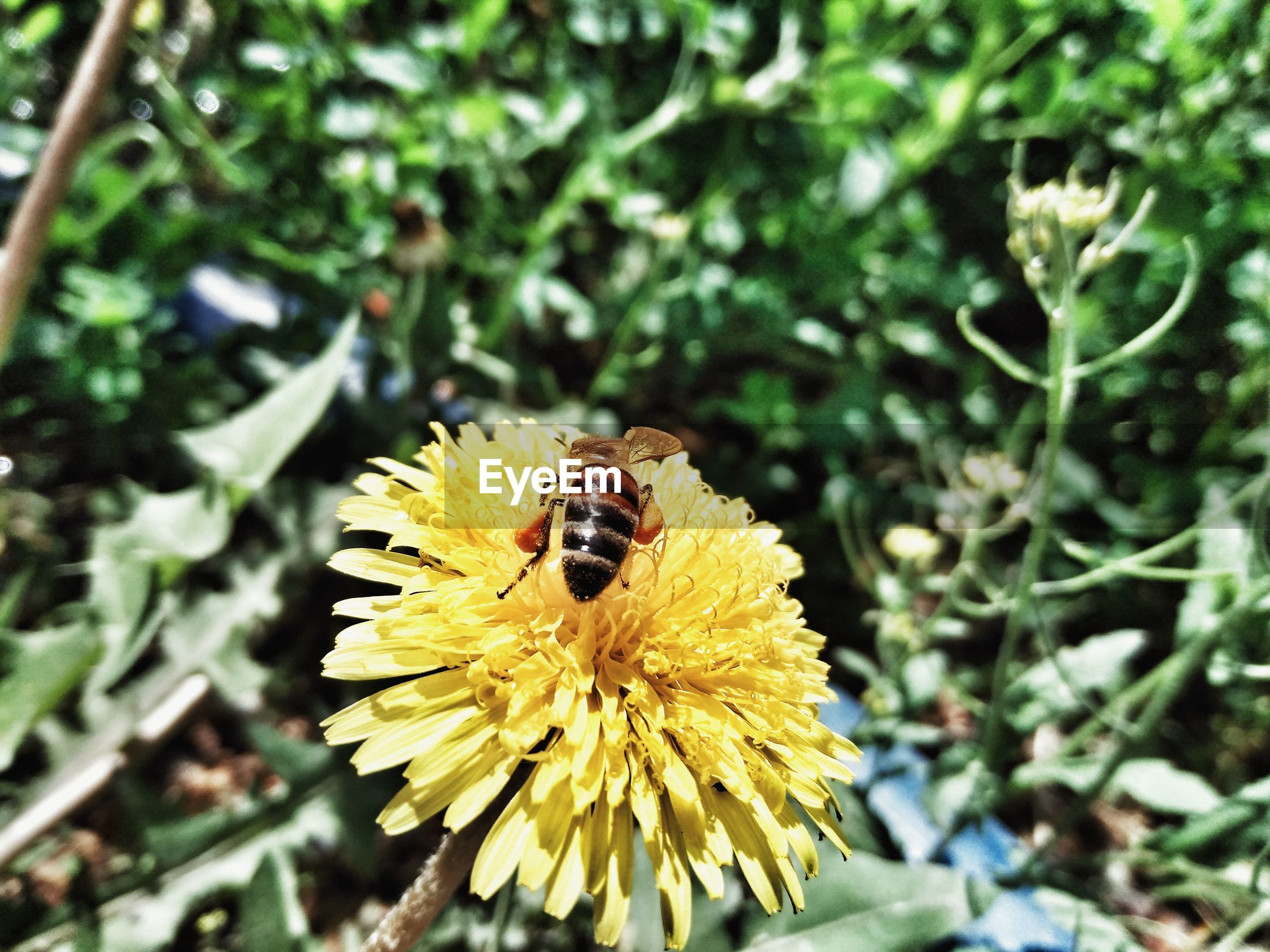invertebrate, animal themes, insect, flower, animal wildlife, animals in the wild, flowering plant, animal, one animal, bee, beauty in nature, plant, petal, flower head, fragility, close-up, yellow, growth, vulnerability, focus on foreground, pollination, no people, outdoors, bumblebee, pollen