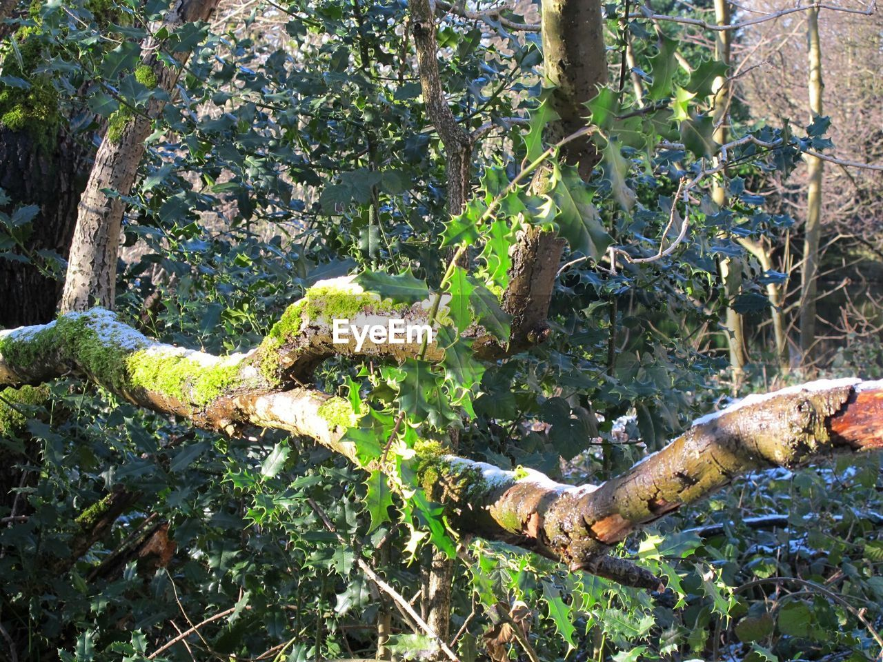 tree, nature, growth, no people, day, leaf, green color, tree trunk, outdoors, forest, branch, plant, banana tree, fruit, fungus, beauty in nature, rotting, close-up
