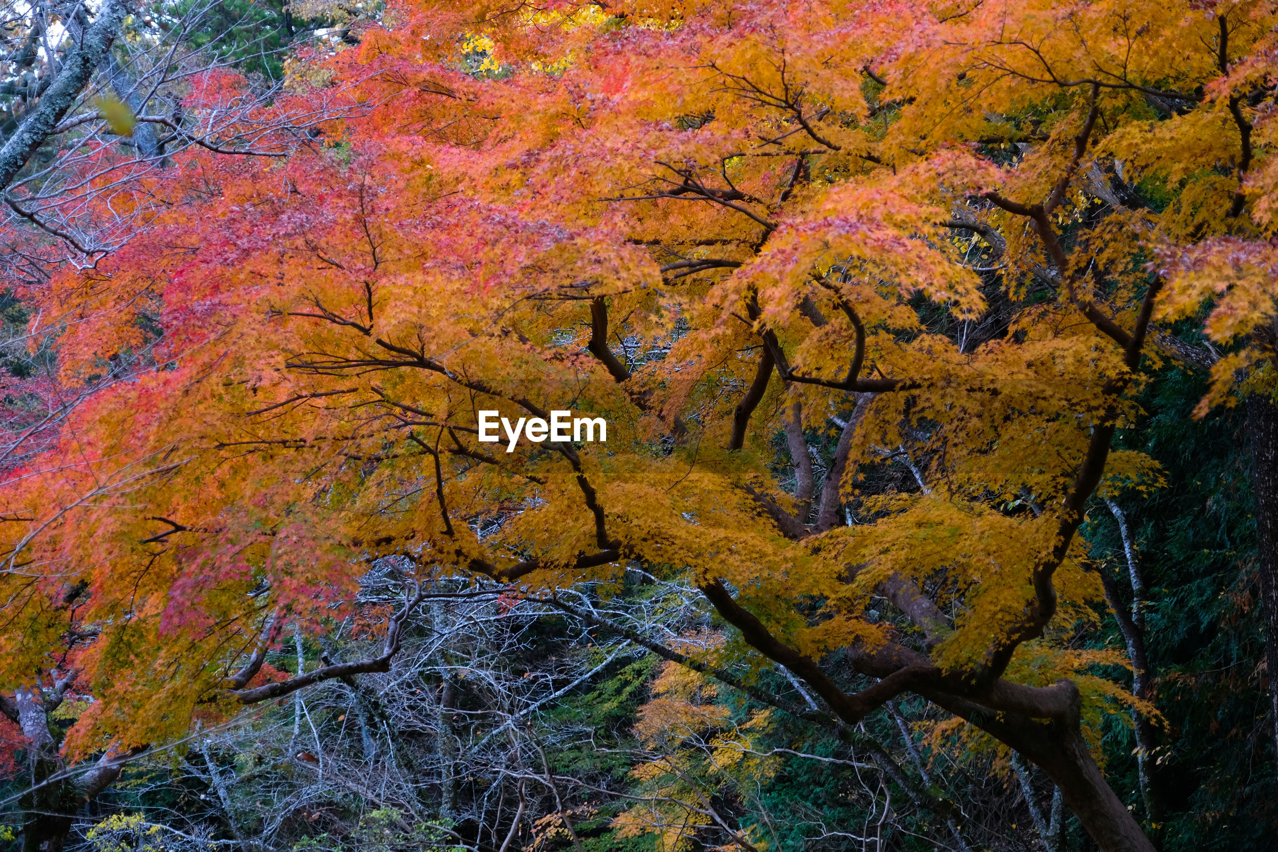 SCENIC VIEW OF AUTUMN TREES